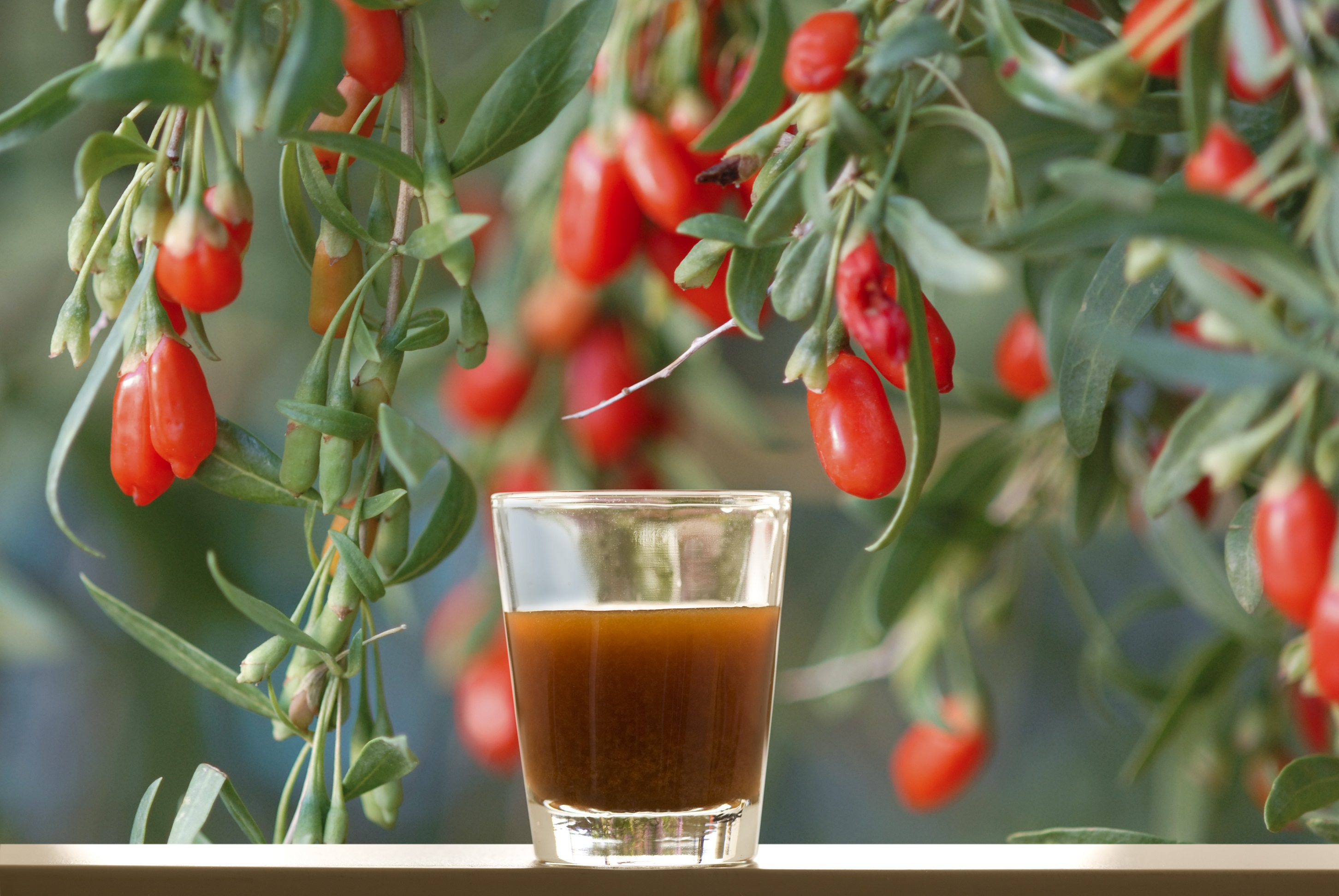 Ningxia red – The super Power Ninja Juice