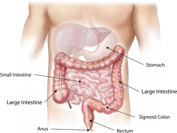 Improve your digestion